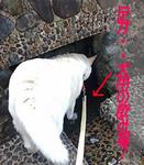 3.15 hirose-yuusui..2.jpg