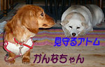 3.29 かんなちゃん.jpg