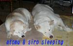 5.13 sleeping.jpg