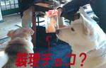 2.14 義理チョコ.jpg
