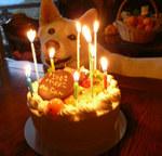 2009.11.cake-with-siro.jpg