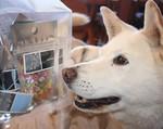 2011.03.08.candy.jpg