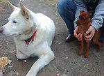4.05-with-dog. siro.jpg